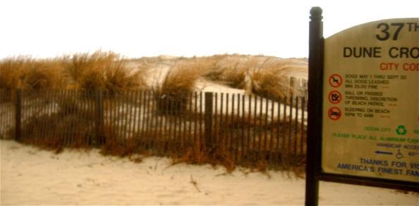 37St dune