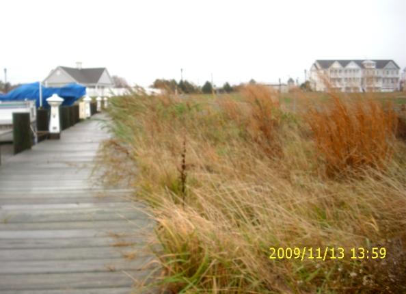 WOC marsh grass